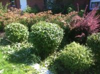 Overgrown Shrubs