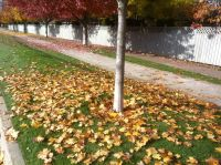 Commercial Leaf Cleanup